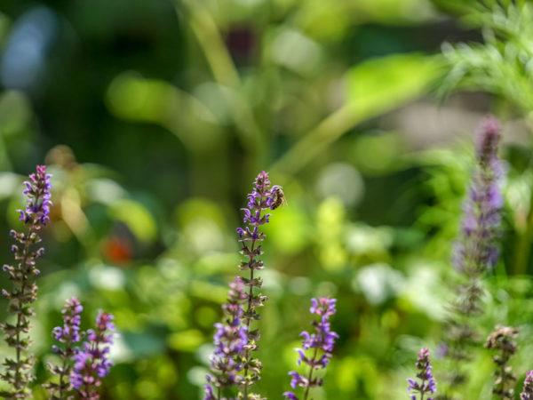 Biene Blüte